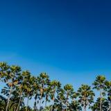 Palma w parku Zdjęcie Royalty Free