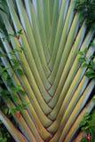 palma wzór Zdjęcia Stock