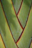 palma wzór Zdjęcia Royalty Free