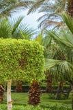 Palma y arbusto Fotografía de archivo libre de regalías