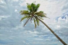 Palma y cielo de coco foto de archivo libre de regalías