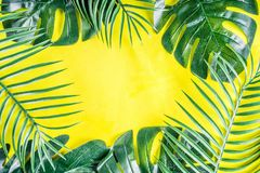 Palma y fondo tropicales de las hojas del monstera fotografía de archivo