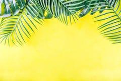 Palma y fondo tropicales de las hojas del monstera fotografía de archivo libre de regalías