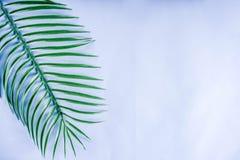 Palma y fondo tropicales de las hojas del monstera fotos de archivo libres de regalías
