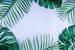 Palma y fondo tropicales de las hojas del monstera imagen de archivo