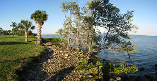 Palma y mangle por el océano Fotografía de archivo libre de regalías