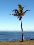 Palma y mar de coco Imagen de archivo