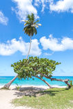 Palma y otro pequeño árbol en la playa tropical hermosa asombrosa Imágenes de archivo libres de regalías