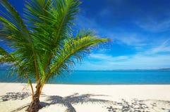 Palma y playa imagen de archivo libre de regalías