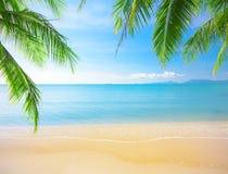 Palma y playa tropical fotos de archivo