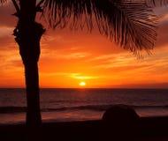 Palma y puesta del sol fotos de archivo