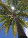 Palma y sol imagen de archivo libre de regalías