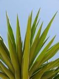 Palma z błękitnym letniego dnia tłem Zdjęcie Royalty Free