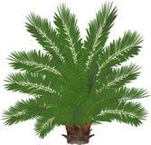 Palma z bujny zieleni liśćmi royalty ilustracja