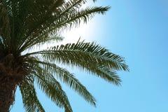 Palma z bujny zieleni ulistnieniem na słonecznym dniu obrazy stock