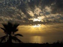 Palma z ogrodzeniem na zmierzchu tle Zdjęcie Royalty Free