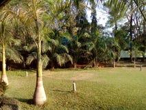 Palma z ranku światłem słonecznym Obrazy Royalty Free