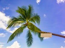 Palma z znakiem na plaży Obrazy Stock