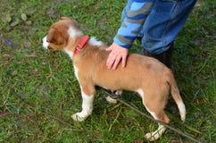 Palmadita del niño un perro de perrito Imagen de archivo libre de regalías