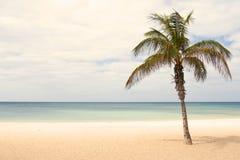 palmae Στοκ Εικόνα