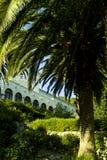 Palmae (Arecaceae) in the villa's garden Royalty Free Stock Photography