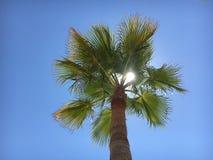 Palmanova palmträd royaltyfri fotografi