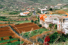 Palmar bygddal av El, Tenerife Royaltyfri Fotografi