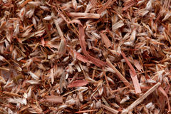 Palmarosa σπόροι χλόης (martinii Cymbopogon) Στοκ εικόνα με δικαίωμα ελεύθερης χρήσης