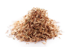Palmarosa grass seeds (Cymbopogon martinii) Stock Image
