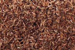 Palmarosa grass seeds (Cymbopogon martinii) Stock Photos