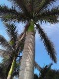palmas Imagen de archivo