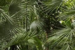 palmas Foto de Stock