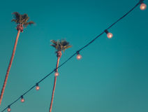 Palmas altas del estilo retro en la puesta del sol con las luces y el espacio de la copia Foto de archivo