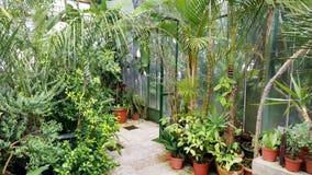Palmas bonitas em Sofia Botanical Garden foto de stock