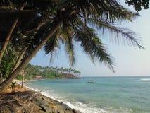 Palmas cerca de la orilla del océano Imagen de archivo