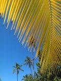 Palmas, cielo y sol dominicanos foto de archivo