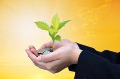 Palmas com um crescimento da árvore Imagem de Stock