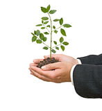 Palmas con la planta de semillero del árbol Imagenes de archivo