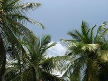 Palmas da árvore de Maldives no céu Foto de Stock Royalty Free