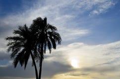 Palmas datileras en la puesta del sol Imágenes de archivo libres de regalías