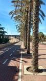Palmas de Almería Fotos de archivo