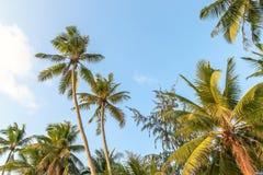 Palmas de Boracay Imagem de Stock
