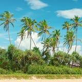 Palmas de coco Imágenes de archivo libres de regalías