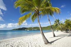 Palmas de coco ao longo de uma praia tropical Imagens de Stock Royalty Free