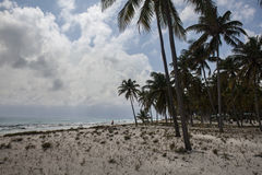 Palmas de coco en la media luna Caye fotografía de archivo libre de regalías