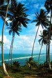 Palmas de coco en la playa del océano fotografía de archivo libre de regalías