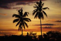Palmas de coco en la puesta del sol Mindanao Filipinas Fotos de archivo
