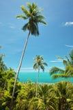 Palmas de coco en Tailandia Imagen de archivo libre de regalías