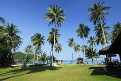 Palmas de coco na praia Imagens de Stock Royalty Free