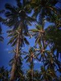 Palmas de coco no por do sol imagens de stock
